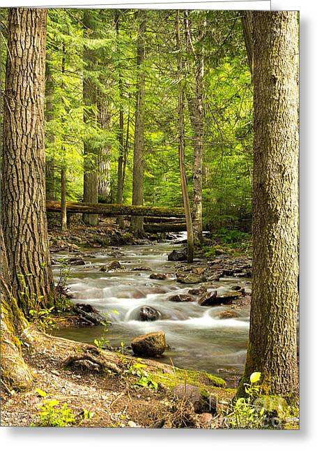Jackson Creek - Among The Cedars Greeting Card by Beve Brown-Clark Photography