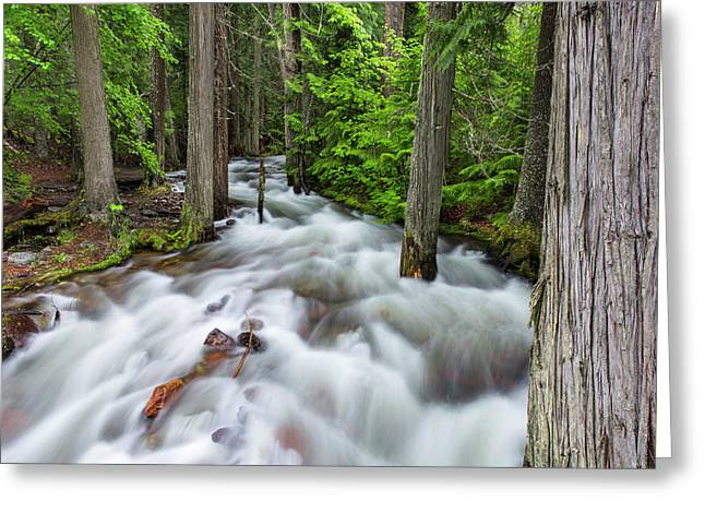Jackson Creek In Glacier National Park Greeting Card by Chuck Haney