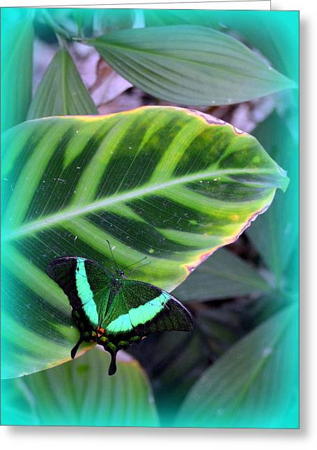 Universities Jewelry Greeting Cards - Jade Butterfly with vignette Greeting Card by Carla Parris