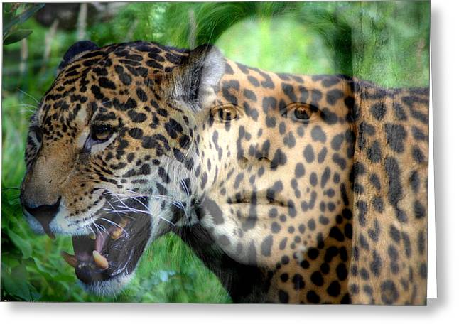 Jaguars Pyrography Greeting Cards - Jag Me Greeting Card by Shannon Kringen
