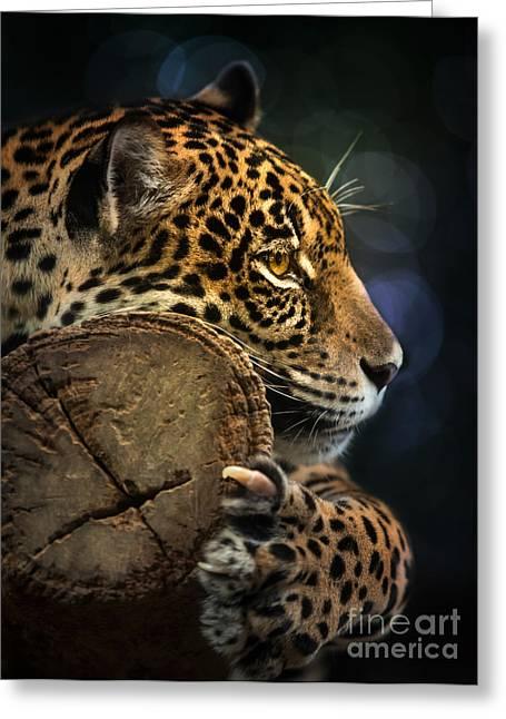 Jaguar Animal Greeting Cards - Jaguar  Greeting Card by Anek Suwannaphoom