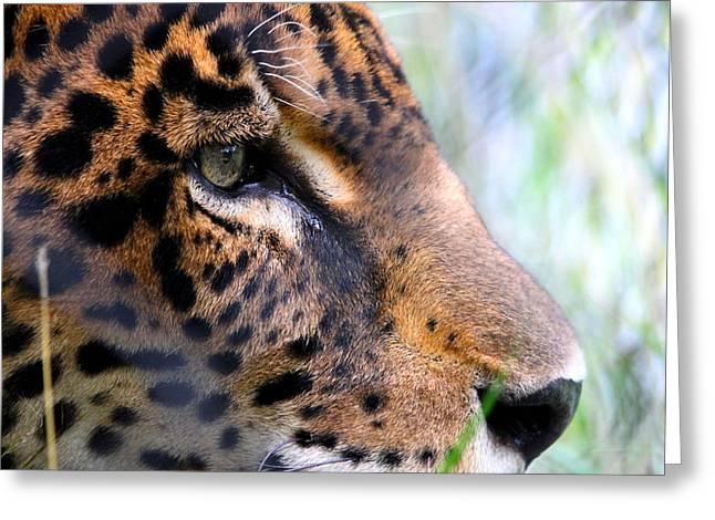 Nathan Miller Greeting Cards - Jaguar Eyes Greeting Card by Nathan Miller