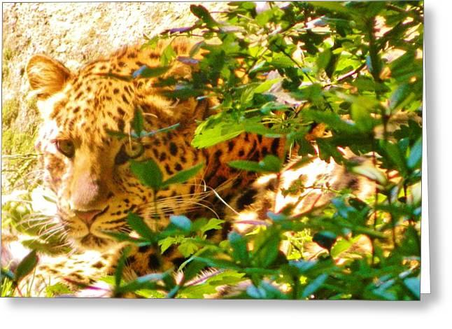 Origional Greeting Cards - Jaguar Greeting Card by Gunter  Hortz