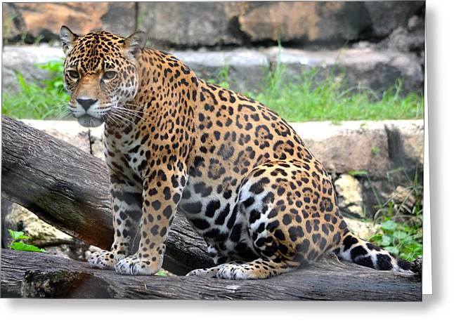 Jacksonville Greeting Cards - Jaguar Portrait 2 Greeting Card by Richard Bryce and Family