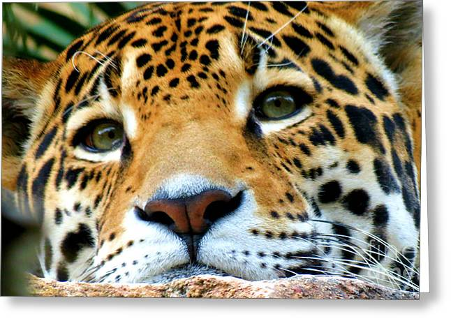 Cat Face Greeting Cards - Jaguar  Greeting Card by Tonya Cribbs