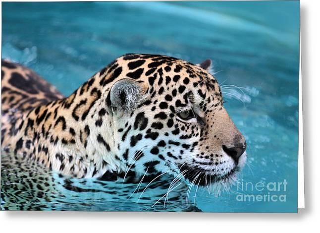 Soft Fur Greeting Cards - Jaguars Love to Swim Greeting Card by Sabrina L Ryan