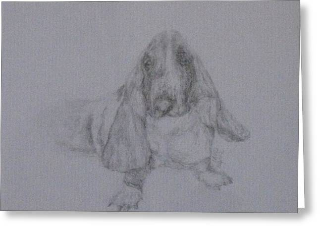 Basset Drawings Greeting Cards - Jake Greeting Card by Laura Hamill