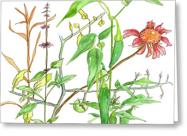 Tomato Drawings Greeting Cards - Jalapeno Coneflower Greeting Card by Cathie Richardson