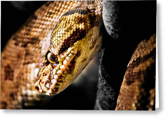 Vertebrate Mixed Media Greeting Cards - Jamaican Boa Greeting Card by M and L Creations