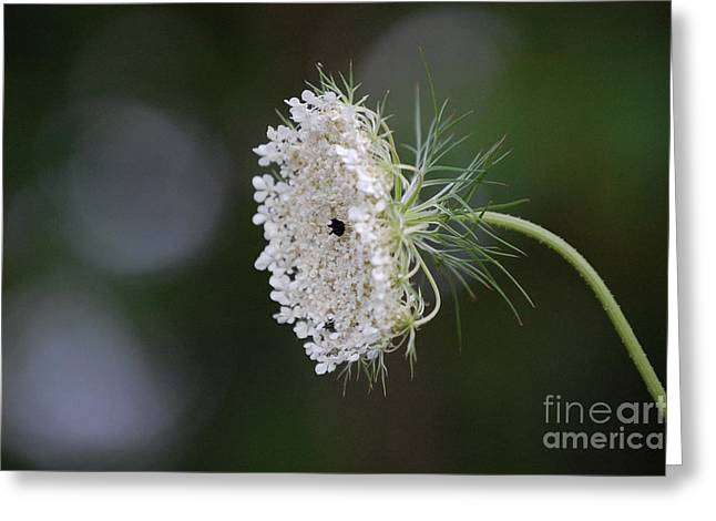 First Star Art By Jammer Greeting Cards - jammer Garden Lace 2 Greeting Card by First Star Art