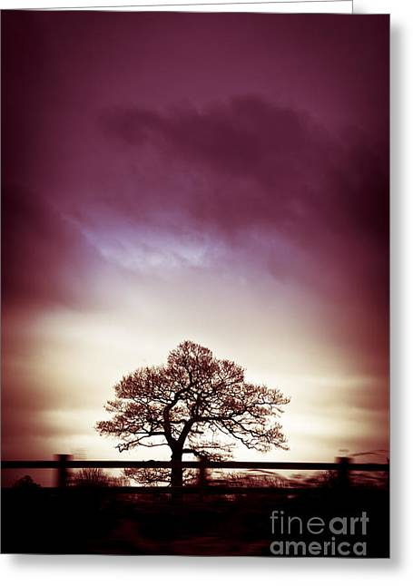 Silhouettes Greeting Cards - January Dusk Greeting Card by Jan Bickerton