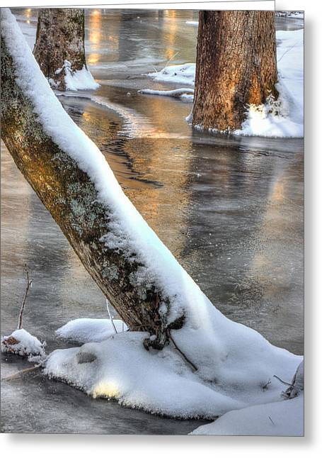 Trees In Winter Greeting Cards - January Freeze Greeting Card by Michael Eingle