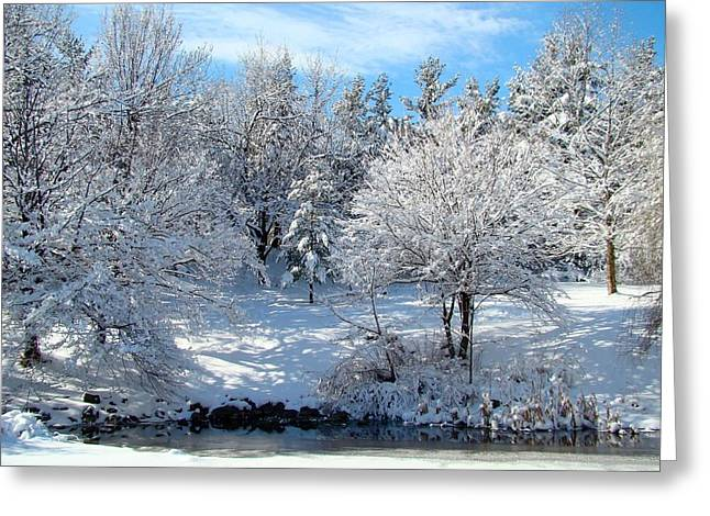 Snow Scenes Greeting Cards - January Trees Greeting Card by Gothicolors Donna Snyder