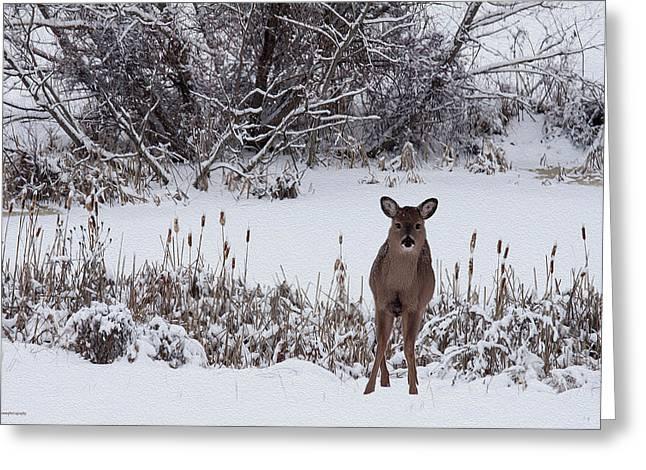 January Jones Greeting Cards - January Visitors Greeting Card by Ron Jones
