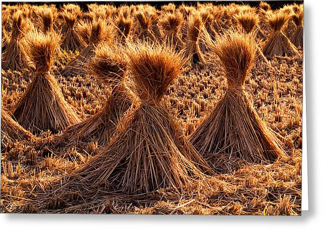 Haying Greeting Cards - Japan Hay Bundles Greeting Card by Daniel Hagerman