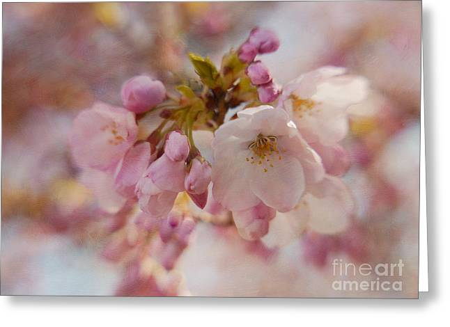 Cherry Blossom Festival Greeting Cards - Japanese Cherry in Pastel Greeting Card by Irina Wardas