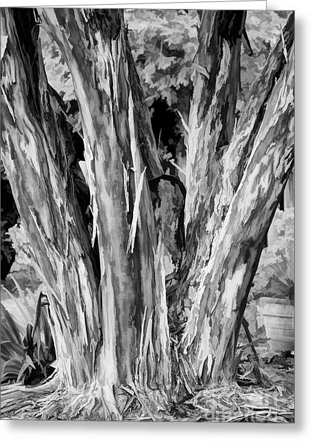 Crape Myrtle Greeting Cards - Japanese Crape Myrtle Tree BW Greeting Card by Dan Carmichael