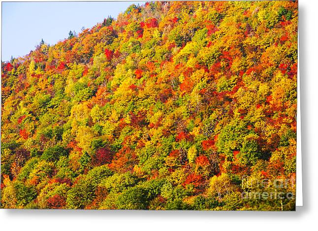 Fir Trees Greeting Cards - Japanese fall colours Greeting Card by Ruth Hofshi