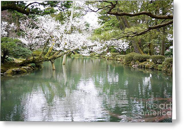 Most Photographs Greeting Cards - Japanese Garden  Greeting Card by Moshe Torgovitsky