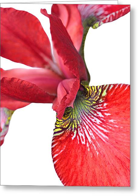 Light And Dark Greeting Cards - Japanese Iris Red White Two Greeting Card by Jennie Marie Schell
