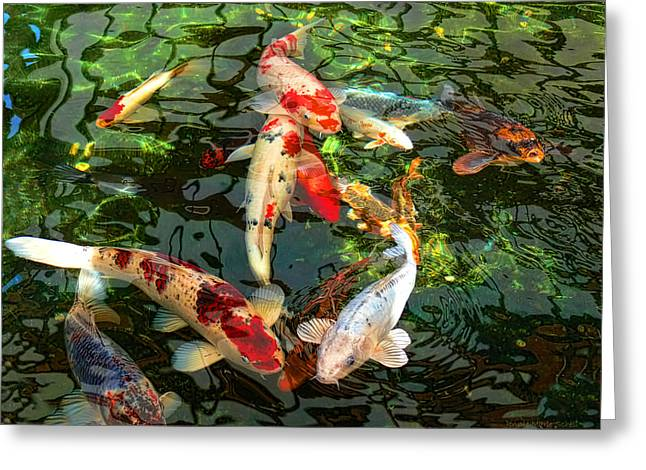 Dark Greeting Cards - Japanese Koi Fish Pond Greeting Card by Jennie Marie Schell