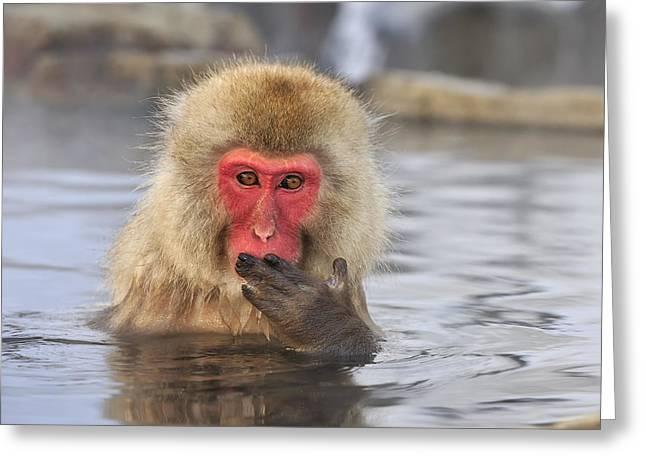 Japanese Macaque In Hot Spring Greeting Card by Thomas Marent