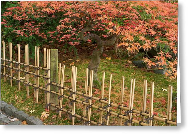 Japanese Maple, Acer Palmatum, In Fall Greeting Card by William Sutton