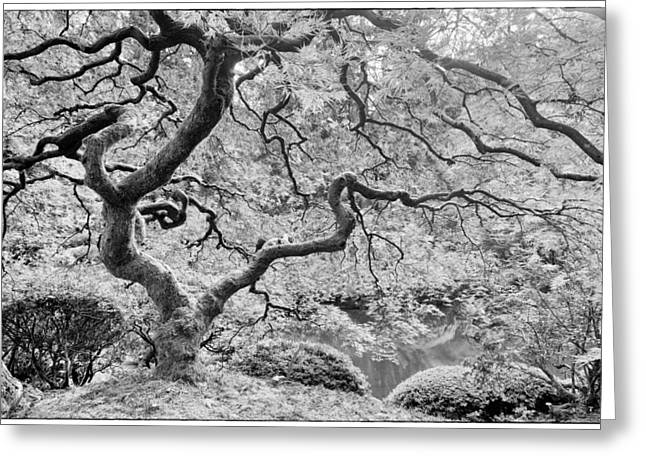 Fall Grass Greeting Cards - Japanese Maple Black and White Greeting Card by Mark Kiver