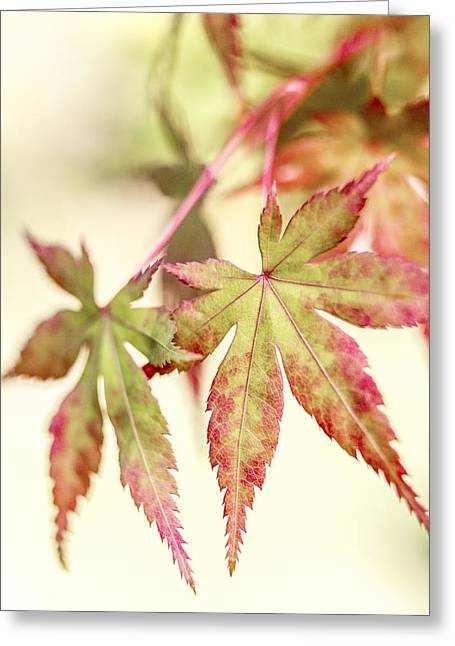 Subdued Greeting Cards - Japanese Maple Greeting Card by Caitlyn  Grasso
