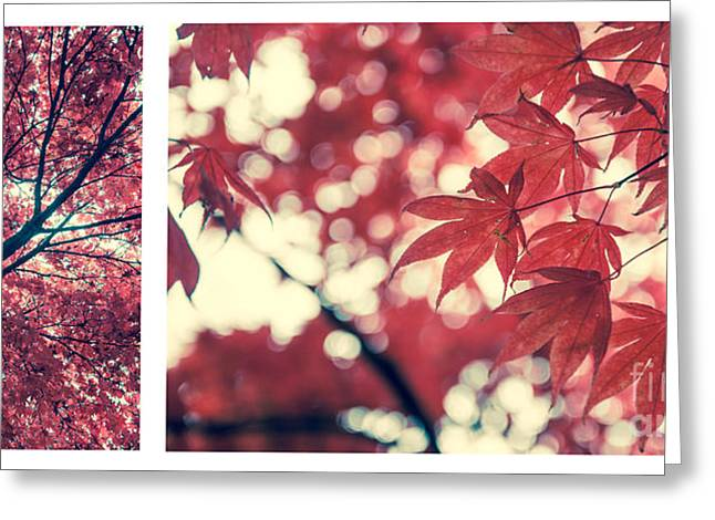 Hannes Cmarits Greeting Cards - Japanese Maple Collage Greeting Card by Hannes Cmarits