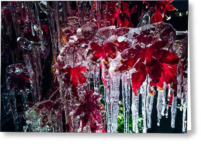 Winter Night Greeting Cards - Japanese Maple Ice Greeting Card by Jeff Mize