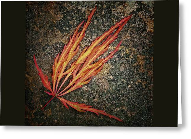 Botony Greeting Cards - Japanese Maple Leaf on Stone Greeting Card by Chris Berry