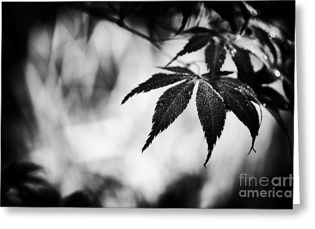 Maple Tree Branches Greeting Cards - Japanese Maple Greeting Card by Tim Gainey