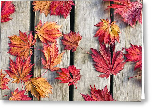 Red Leaves Greeting Cards - Japanese Maple Tree Leaves on Wood Deck Greeting Card by David Gn