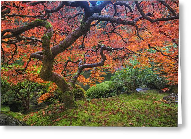Mark Kiver Greeting Cards - Japanese Maple Tree Greeting Card by Mark Kiver