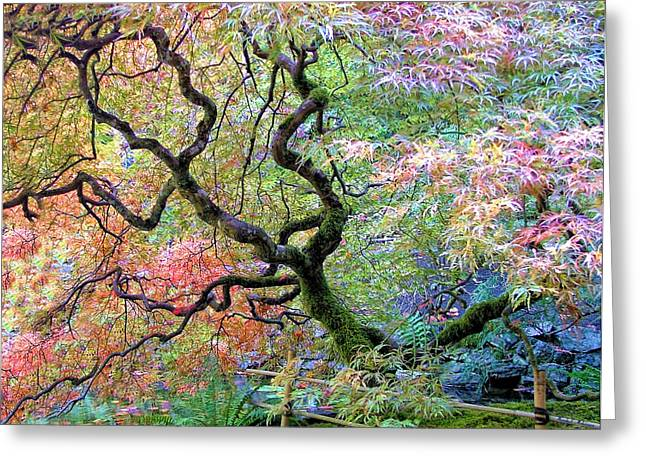 October Framed Greeting Cards - Japanese Maple Greeting Card by Wendy McKennon