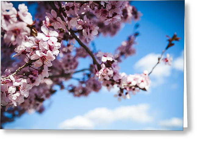Japanese Sakura Greeting Card by Anthony Citro