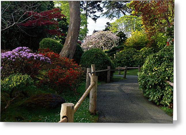 Tea Tree Flower Greeting Cards - Japanese Tea Garden, San Francisco Greeting Card by Panoramic Images