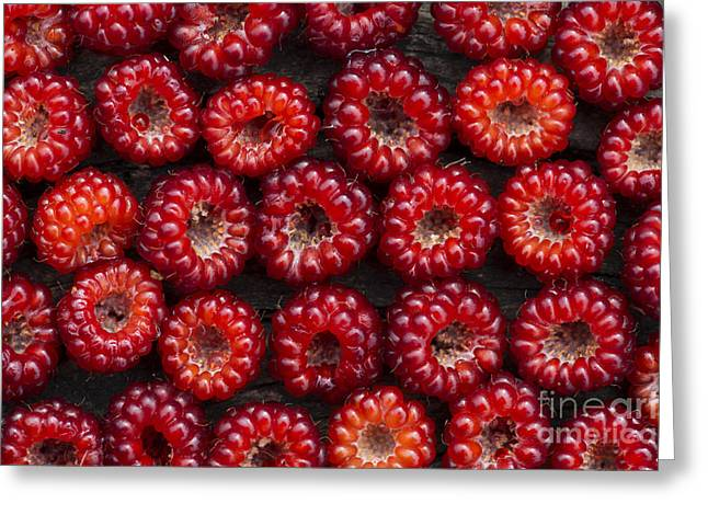 Red Berries Greeting Cards - Japanese Wineberry Pattern Greeting Card by Tim Gainey