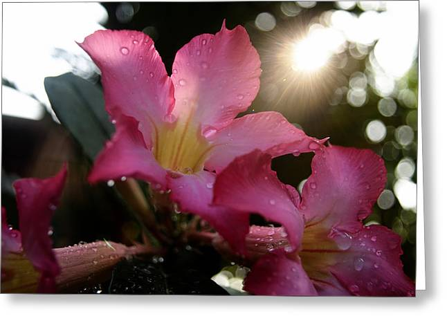 Wohnung Greeting Cards - Jardin du Matin Greeting Card by Miguel Winterpacht