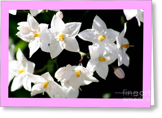 Shower Curtain Greeting Cards - Jasmin Blossom Greeting Card by  ILONA ANITA TIGGES - GOETZE  ART and Photography