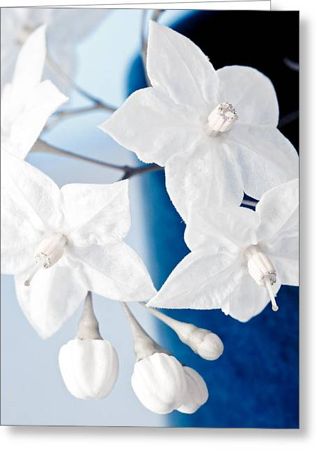 Essentials Greeting Cards - Jasmine Greeting Card by Frank Tschakert