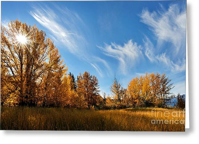 Alberta Landscape Greeting Cards - Jasper - Autumn Sky Chief Greeting Card by Terry Elniski