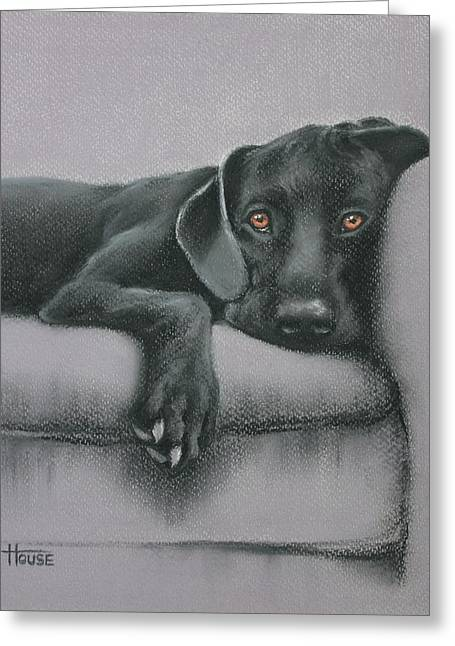 Recently Sold -  - Puppies Pastels Greeting Cards - Jasper Greeting Card by Cynthia House