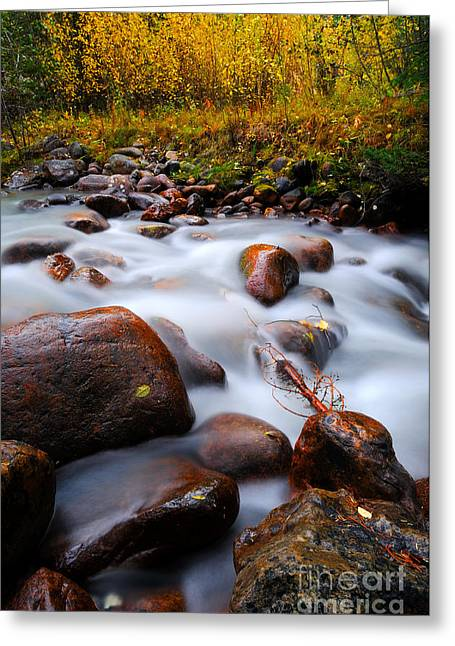 Alberta Water Falls Greeting Cards - Jasper - Ranger Creek Greeting Card by Terry Elniski