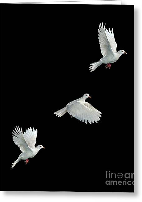 Java Dove In Flight Greeting Card by Stephen Dalton