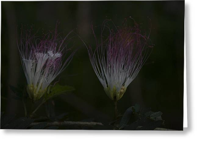 Reserve Greeting Cards - Java Island Flowers Greeting Card by Miguel Winterpacht