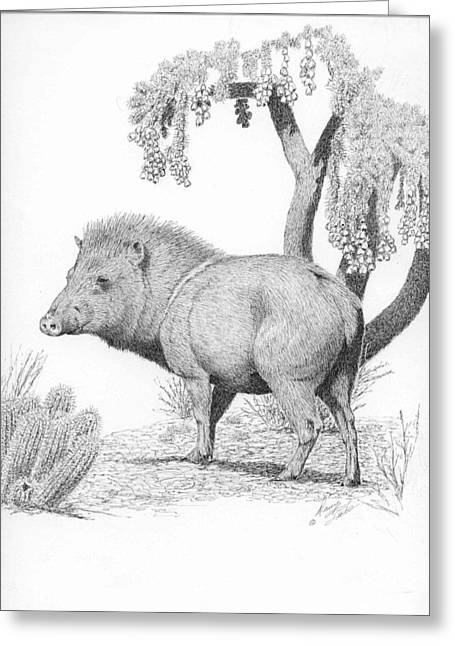Collar Drawings Greeting Cards - Javelina  Greeting Card by Darcy Tate