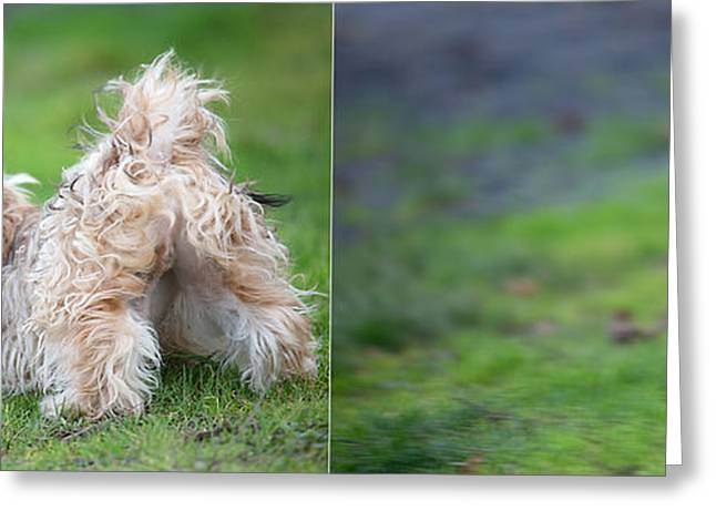 Dog Photographs Greeting Cards - Jax Greeting Card by Rebecca Cozart