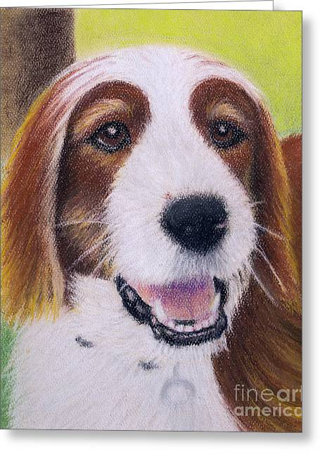 Playful Pastels Greeting Cards - Jed - Irish Red and White Setter Portrait Greeting Card by Jacqueline Barden